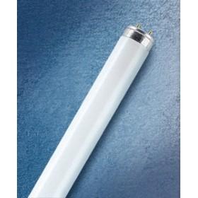 Svece stabs Bolsius oranža 5.8x12cm